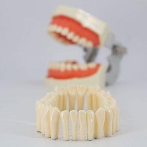 Juego Piezas Dentales para Tallar